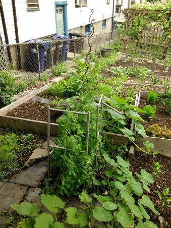 Garden plot, June 2015.